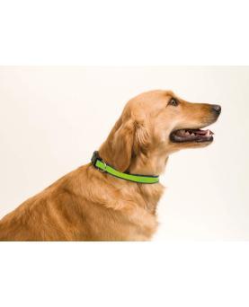 Collar Muttley - Imagen 2